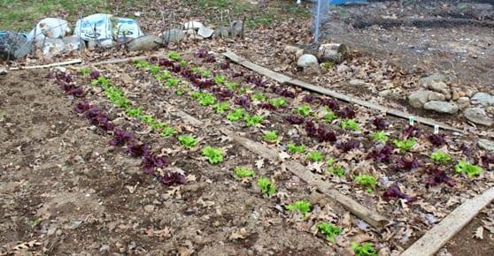 Garden to table blog 2